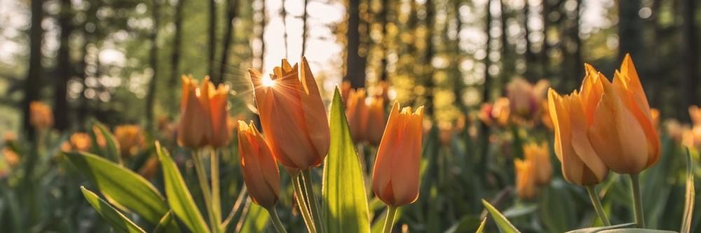 Fleurs PF
